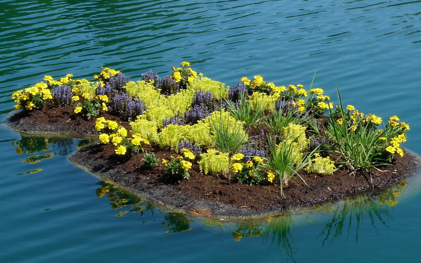 Ornamental, terrestrial flowers on floating island