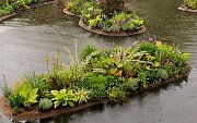 Baltimore dock with ornamental plants and flowers