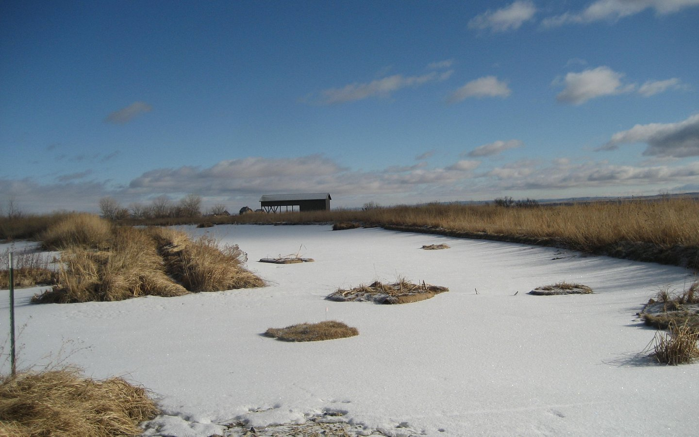 Frozen rural pond with BioHavens in Montana