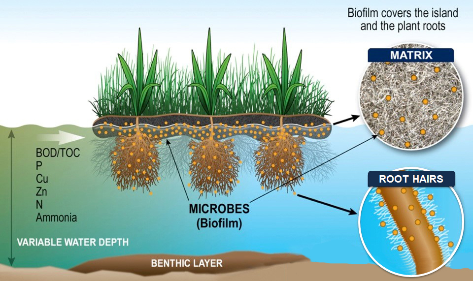 Diagram of a functioning BioHaven floating treatment wetland